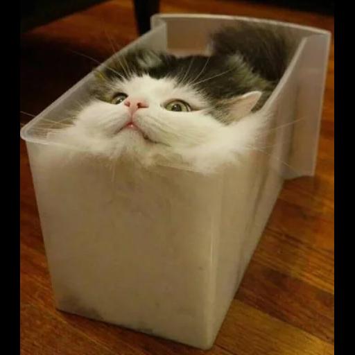 Cat2 - Sticker 6