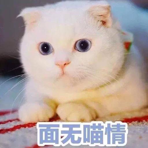 CuteCat1 - Sticker 19