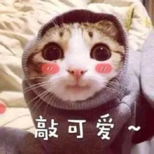 CuteCat1 - Sticker 7