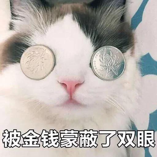 CuteCat1 - Sticker 17