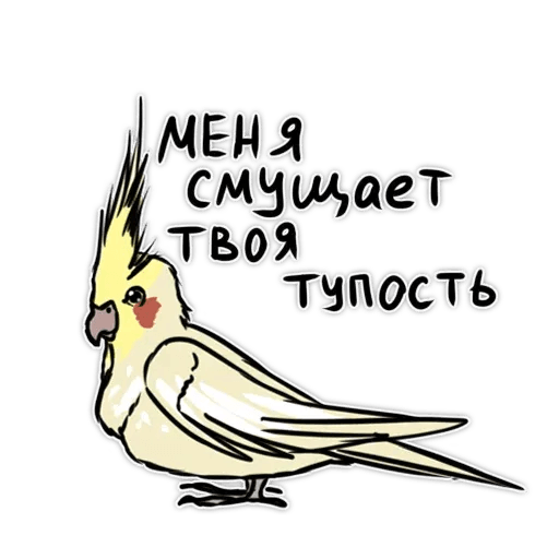 Попугаи - Sticker 10
