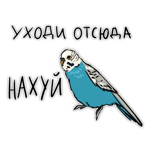 Попугаи - Sticker 22