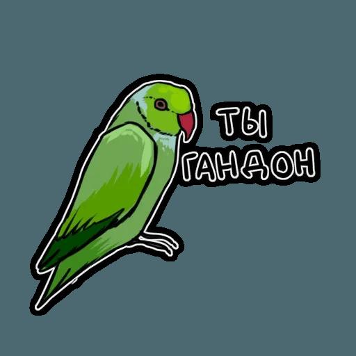 Попугаи - Sticker 13