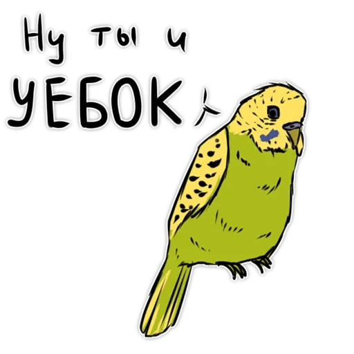 Попугаи - Sticker 2