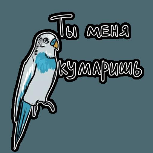 Попугаи - Sticker 12