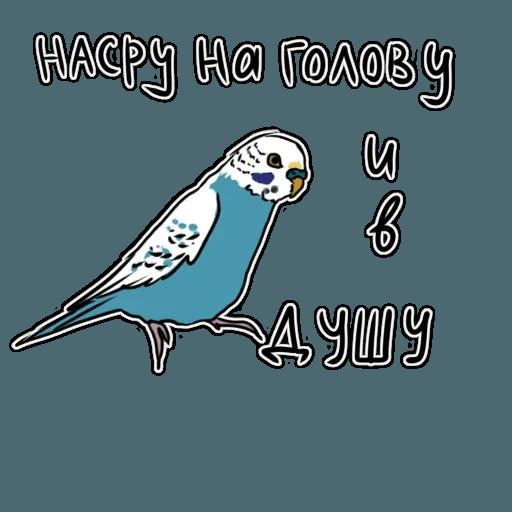 Попугаи - Sticker 27