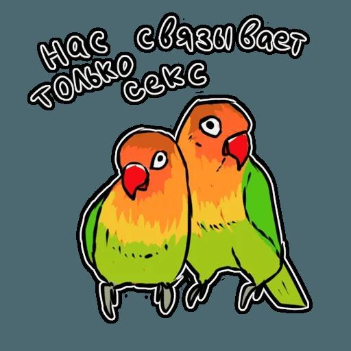 Попугаи - Sticker 6