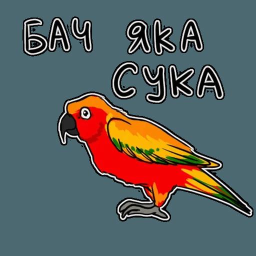 Попугаи - Sticker 30