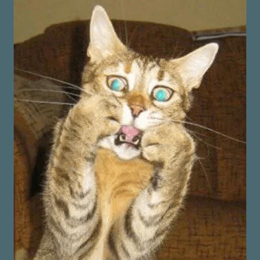 Meow2 - Sticker 10
