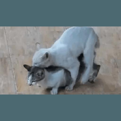 Meow2 - Sticker 23