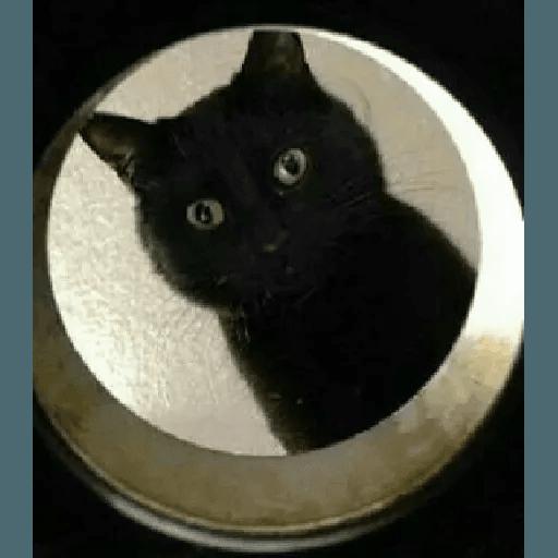 Meow2 - Sticker 3