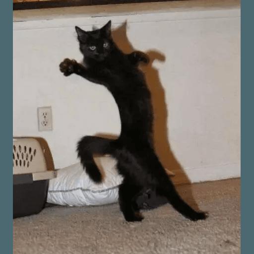 Meow2 - Sticker 6