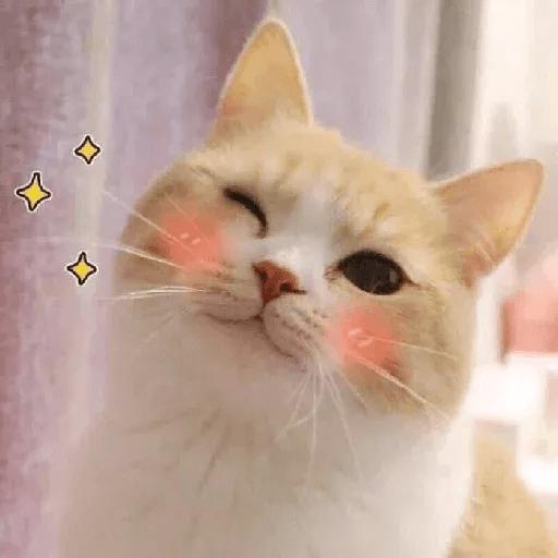 Meow2 - Sticker 12