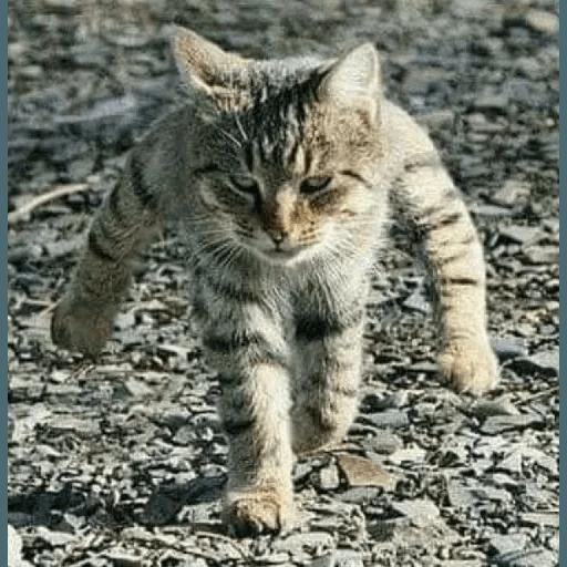 Meow2 - Sticker 11