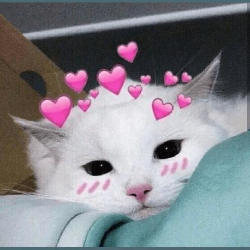 Meow2 - Sticker 22