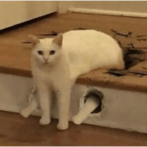 Meow2 - Sticker 24