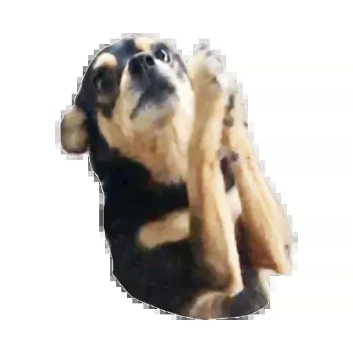 Perros - Sticker 26