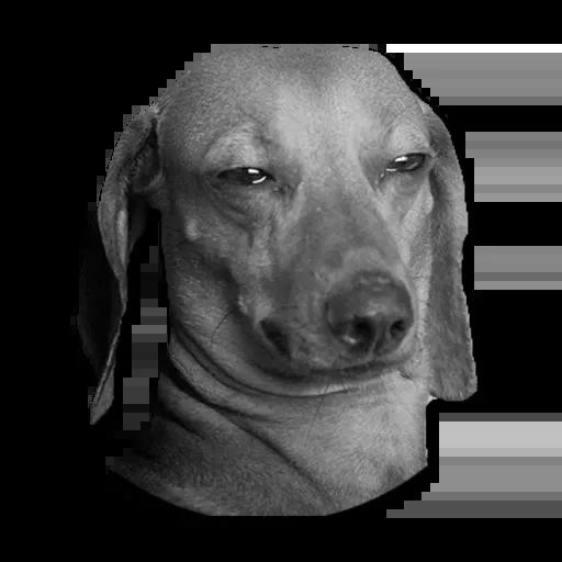 Perros - Sticker 8