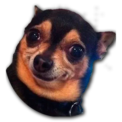Perros - Sticker 4
