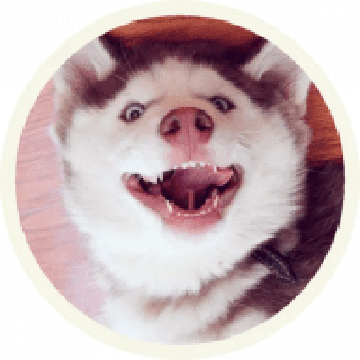 Husky - Sticker 11