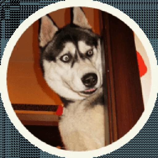 Husky - Sticker 2