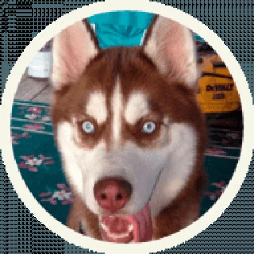 Husky - Sticker 16
