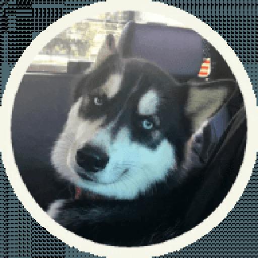 Husky - Sticker 5