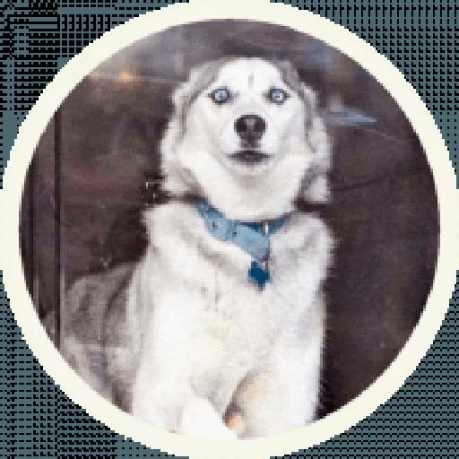 Husky - Sticker 14
