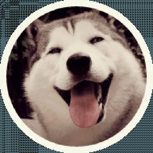 Husky - Sticker 12