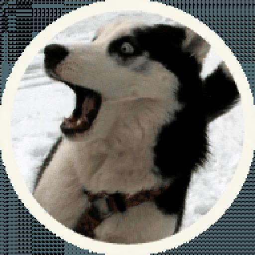 Husky - Sticker 4