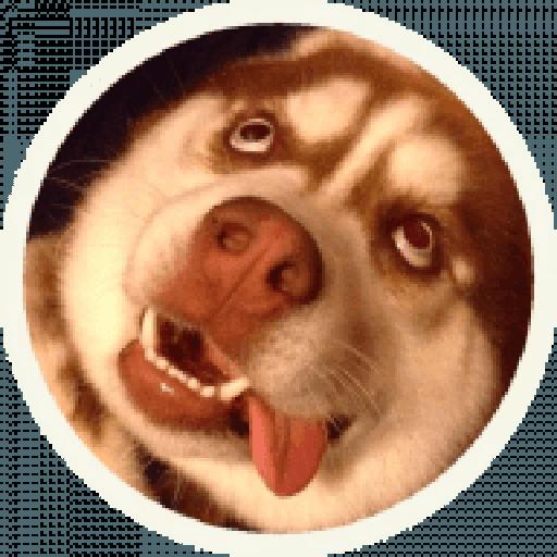 Husky - Sticker 8