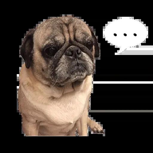 Pug - Sticker 3