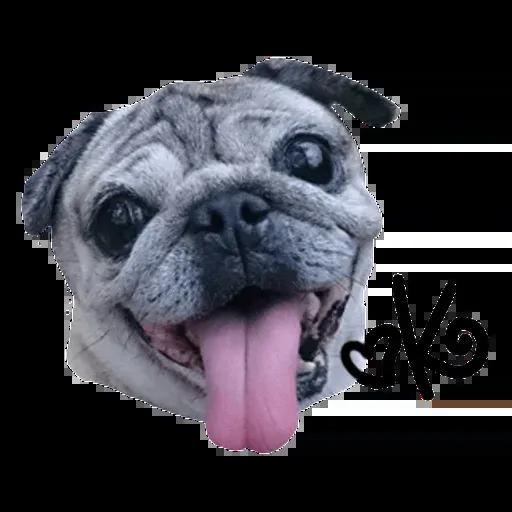 Pug - Sticker 5