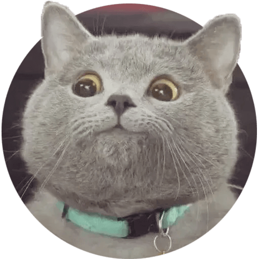 Real Cat meme 1 - Sticker 4