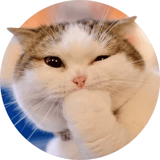 Real Cat meme 1 - Sticker 24