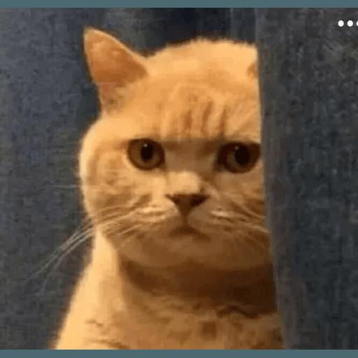 Real Cat meme 1 - Sticker 2