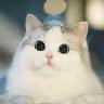 Real Cat meme 1 - Tray Sticker